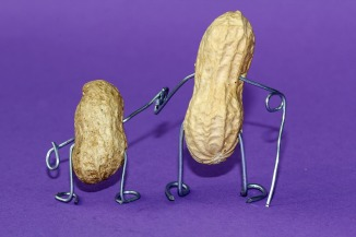 peanut-660301_1280